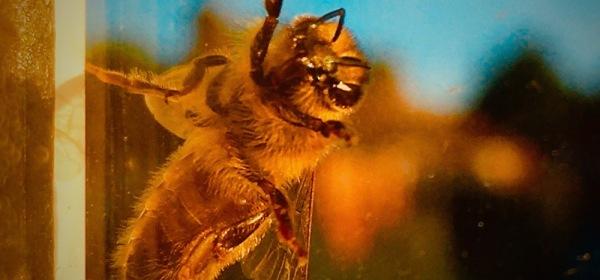 Bee Kind: Ian Timothy